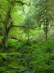 The Hall of Mosses Hoh Rainforest, Olympic National Park, Washington, USA by Terry Eggers