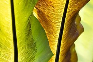 USA, Hawaii, Oahu, Tropical Gardens with philodendrons by Terry Eggers