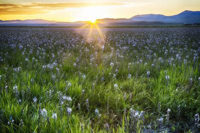 USA, Idaho, Fairfield, Camas Prairie, Sunset in the Camas Prairie by Terry Eggers