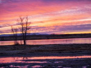 USA, New Mexico, Sunrise at Bosque del Apache National Wildlife Refuge by Terry Eggers