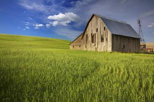 USA, Washington, Palouse. Old Barn in Field of Spring Wheat (Pr) by Terry Eggers