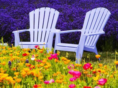 USA, Washington State, Adirondack chairs In Field of Lavender and Poppies by Terry Eggers