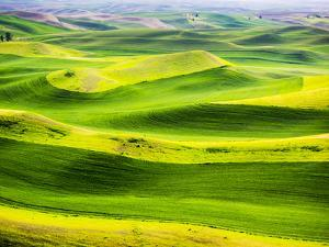 USA, Washington State. Aerial of Palouse Region. by Terry Eggers