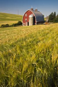 USA, Washington State, Red Barn in Field of Harvest Wheat by Terry Eggers