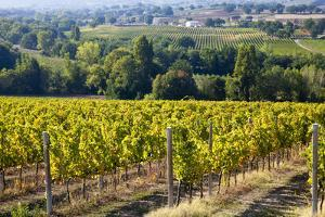 Vineyards Draping Hillsides Near Monte Falco by Terry Eggers