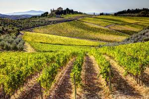 Vineyards in the Rolling Hills of Tuscany by Terry Eggers