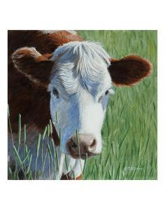 Moo by Terry Isaac