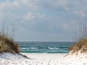 A Path through the Sand Dunes Leading to the Beach. by Terry Putman