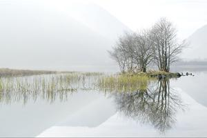 Misty Lake by Terry Roberts Photography