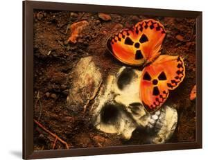 Butterfly on Skull by Terry Why