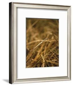 Needle in a Haystack by Terry Why