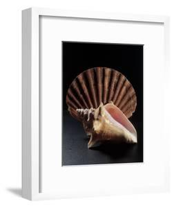 Sea Shells by Terry Why