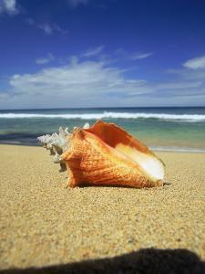 Seashell on Beach, Tobago, Caribbean by Terry Why