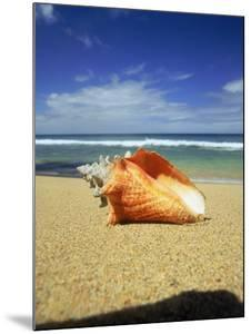 Seashell on Beach, Tobago, Caribbean by Terry Why