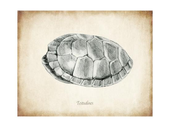 Testudines Shell A-THE Studio-Premium Giclee Print