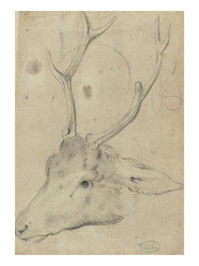 Tête de cerf--Giclee Print
