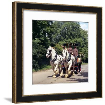 Tetley Shire Horses, Roundhay Park, Leeds, West Yorkshire, 1968-Michael Walters-Framed Photographic Print