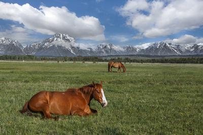 https://imgc.artprintimages.com/img/print/teton-horses_u-l-q10pjmv0.jpg?p=0