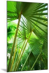 Jamaica, Palm Leaves by Tetra Images