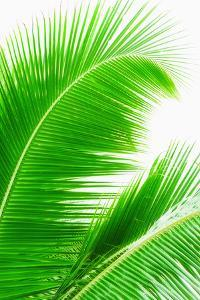 Mexico, Yucatan, Palm Leaves by Tetra Images