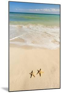 Mexico, Yucatan, Two Starfish on Beach by Tetra Images