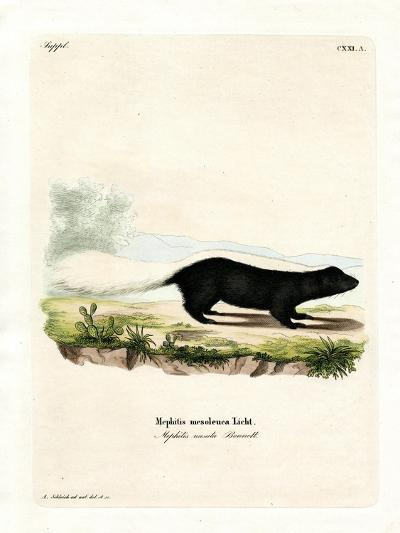 Texan Skunk--Giclee Print
