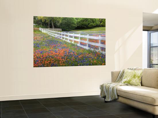 Texas Bluebonnets and Paintbrush Along White Fence Line, Texas, USA-Julie Eggers-Giant Art Print