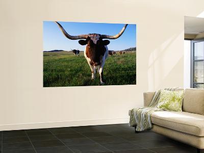 Texas Longhorn Cattle-John Elk III-Giant Art Print