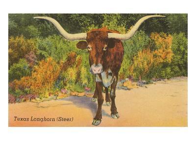 Texas Longhorn Steer--Art Print