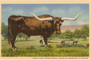 Texas Longhorn Steer