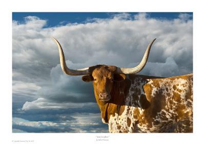 Texas Longhorn-Robert Dawson-Art Print