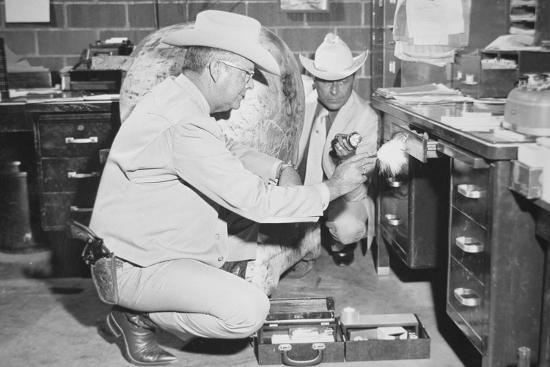 Texas Rangers Investigating a Crime Scene, C.1970--Photographic Print