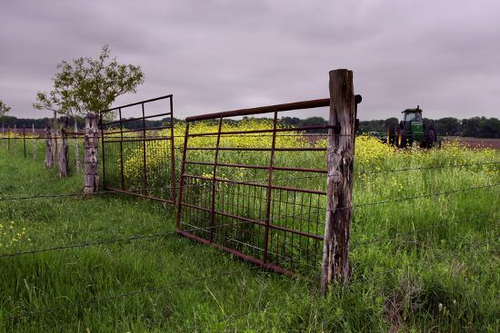 Texas Spring Field-Maarigard-Photographic Print
