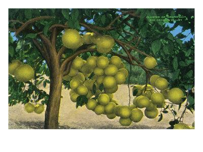 https://imgc.artprintimages.com/img/print/texas-view-of-a-cluster-of-grapefruit-in-the-rio-grande-valley-c-1940_u-l-q1goq010.jpg?p=0