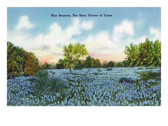Texas - View of a Field of Blue Bonnets, c.1945-Lantern Press-Art Print