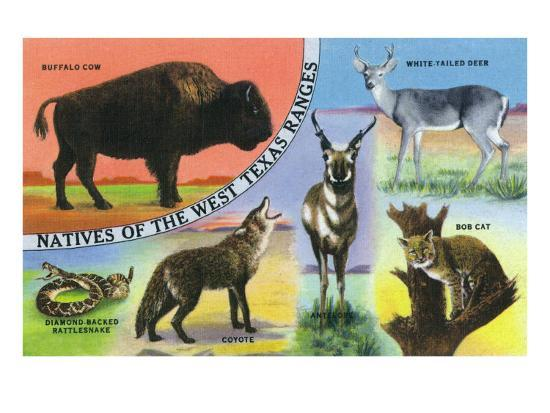 Texas - View of West Texas Natives: Buffalo, Coyote, Rattlesnake, Bob Cat, Antelope, Deer, c.1943-Lantern Press-Art Print