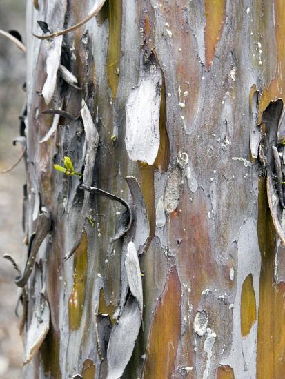 Texture and Patterns in Tree Near Sedona, Arizona, USA-Diane Johnson-Photographic Print