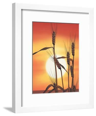 Texture, Sunrise Over Wheat--Framed Art Print