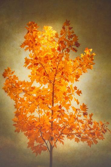 Textured Autumn-Philippe Sainte-Laudy-Photographic Print