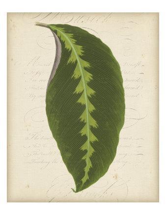 https://imgc.artprintimages.com/img/print/textured-leaf-study-iii_u-l-p8l9gg0.jpg?p=0