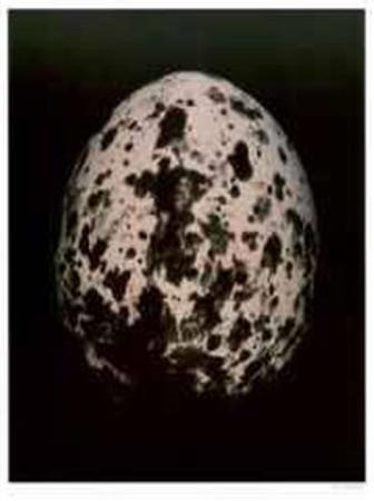 Egg II