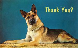 Thank You? Quizzical German Shepherd