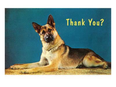 Thank You? Quizzical German Shepherd--Art Print