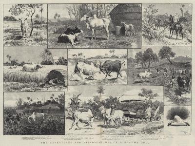 The Adventures and Misadventures of a Brahma Bull-Adrien Emmanuel Marie-Giclee Print