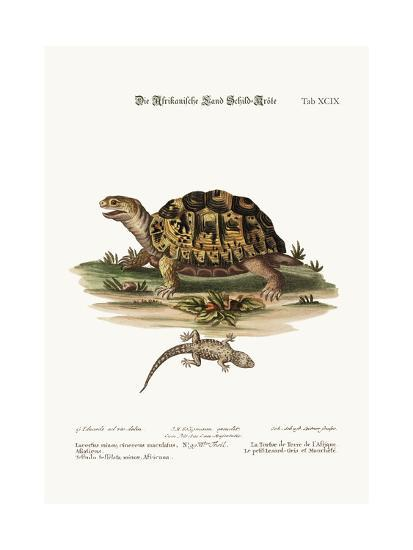 The African Land-Tortoise. the Small Spotted Grey Lizard, 1749-73-George Edwards-Giclee Print