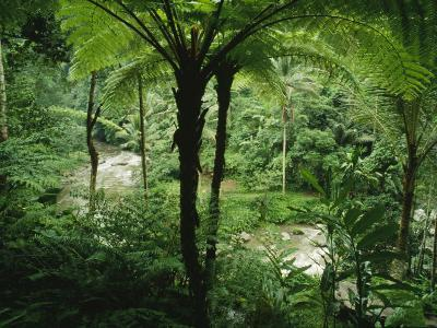 The Agung River Cuts Through a Dense Rain Forest of Ferns and Trees--Photographic Print