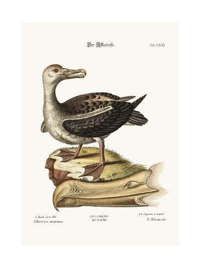 The Albatross, 1749-73-George Edwards-Giclee Print