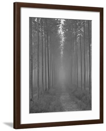 the Alley-Doug Chinnery-Framed Photographic Print