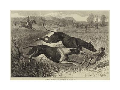 The Altcar Coursing Meeting, Running for the Waterloo Cup--Giclee Print