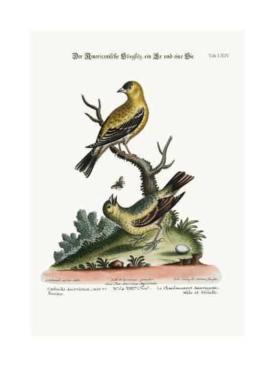The American Goldfinch, Cock and Hen, 1749-73-George Edwards-Giclee Print